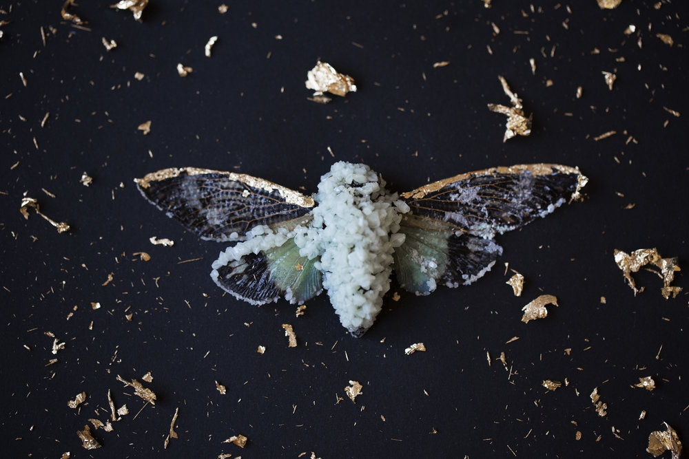 Insect Alchemy: Tyler Thrasher_cicacda crystallized