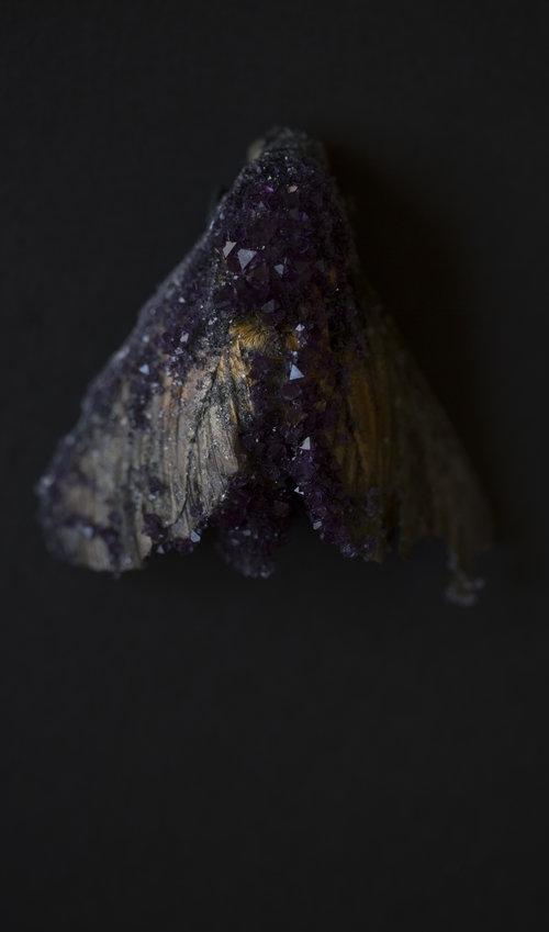 Insect Alchemy: Tyler Thrasher_ Moth