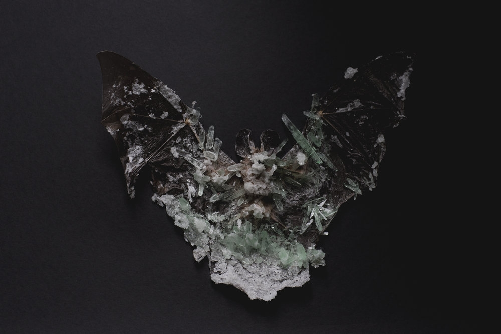Insect Alchemy: Tyler Thrasher _ crystallized bat