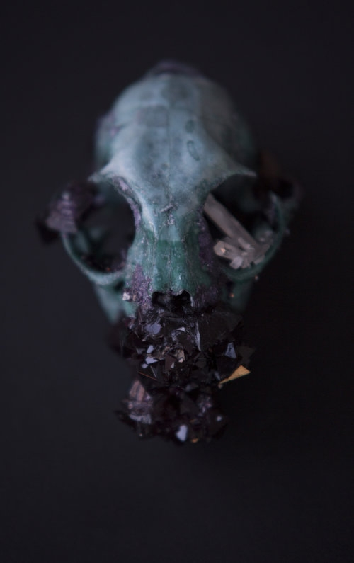 Insect Alchemy: Tyler Thrasher _skull
