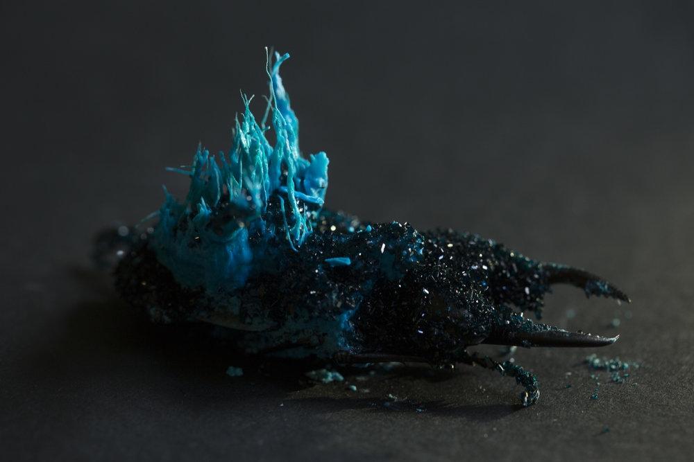 Insect Alchemy: Tyler Thrasher