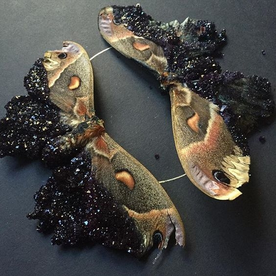 Insect Alchemy: Tyler Thrasher _ butterflies perserved
